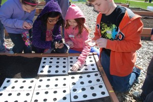 Mrs. Gettler's 3rd grade students plant their garden seeds.